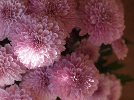 青梗菜と食用菊 +ハーブのスコーンで昼御飯_b0254207_21411879.jpg
