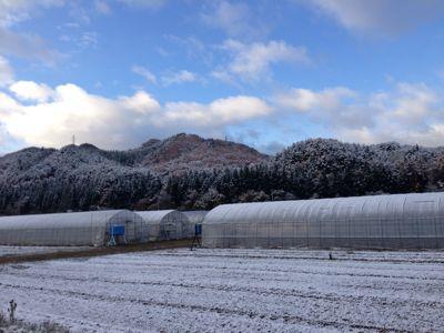 昨日は初雪、今日は晴れ_d0099708_9221396.jpg