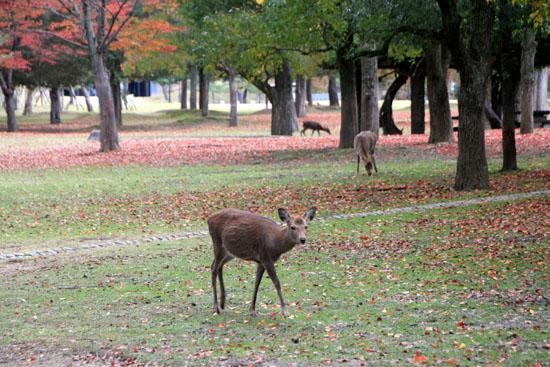 奈良公園へ_e0048413_19221042.jpg