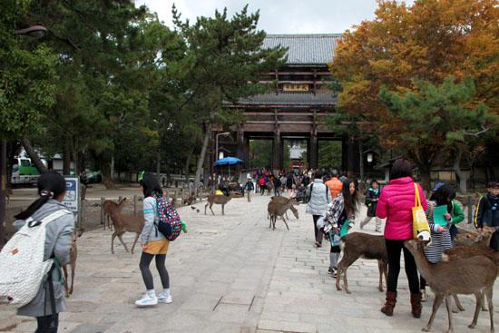 奈良公園へ_e0048413_19222259.jpg