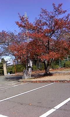 『 秋 』 を味わう 。。。_b0201831_13554688.jpg