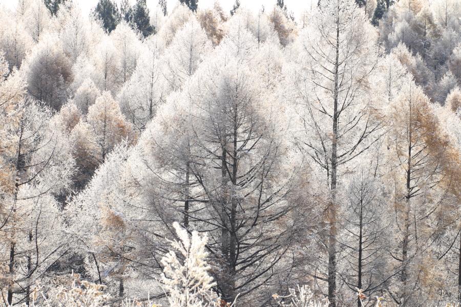 冬の足音_a0203733_21444529.jpg