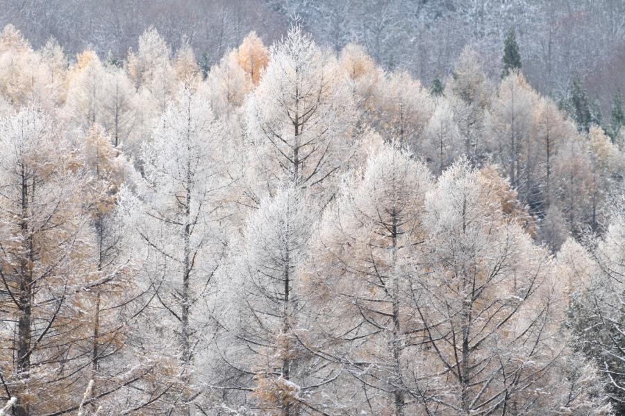 冬の足音_a0203733_21491530.jpg