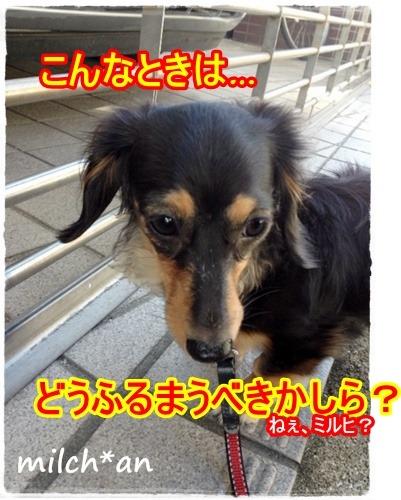 b0115642_23245066.jpg