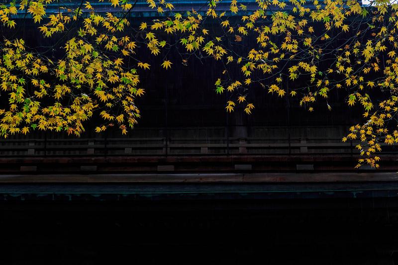 雨の紅葉めぐり(比叡山・延暦寺/東塔)_f0155048_2259468.jpg