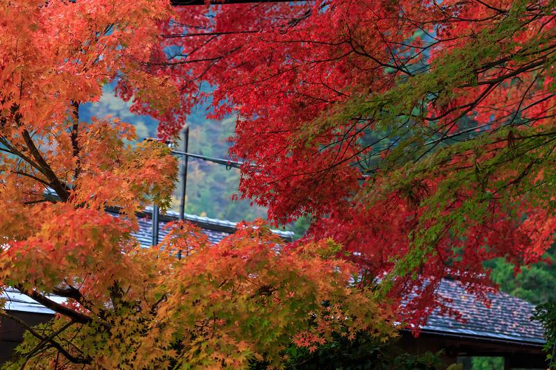 雨の紅葉めぐり(比叡山・延暦寺/東塔)_f0155048_2322115.jpg