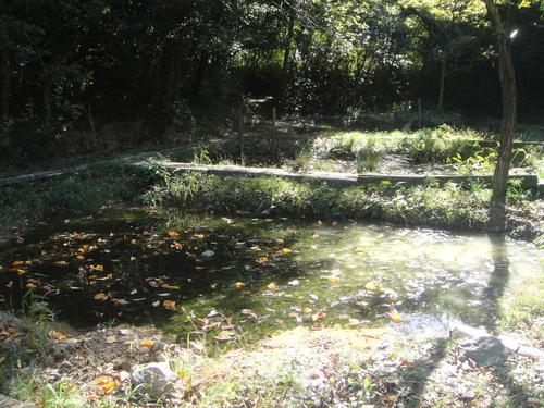 キカラスウリの保護・・・せんなん里海公園唯一の植物_c0108460_21592258.jpg