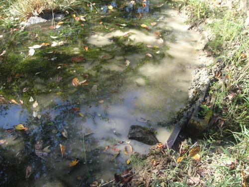 キカラスウリの保護・・・せんなん里海公園唯一の植物_c0108460_2203318.jpg
