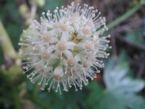 キカラスウリの保護・・・せんなん里海公園唯一の植物_c0108460_22174472.jpg