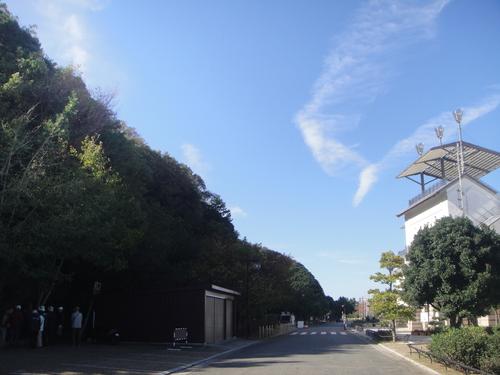 キカラスウリの保護・・・せんなん里海公園唯一の植物_c0108460_223614.jpg
