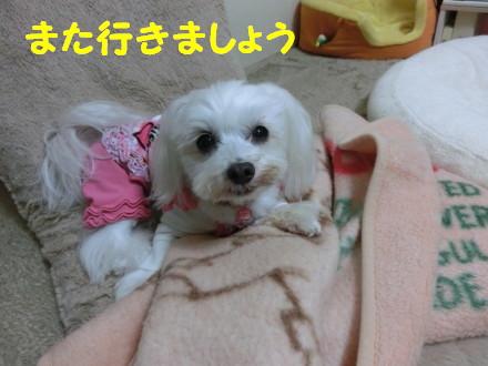 b0193480_1233360.jpg