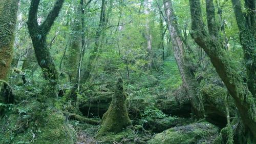 ひさしぶりの森。_b0240382_22104044.jpg