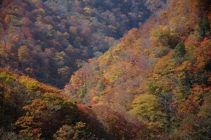 西郷村 甲子高原・甲子トンネル付近の紅葉 _e0165983_944426.jpg
