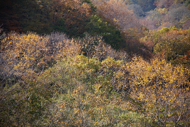 西郷村 甲子高原・甲子トンネル付近の紅葉 _e0165983_9463374.jpg