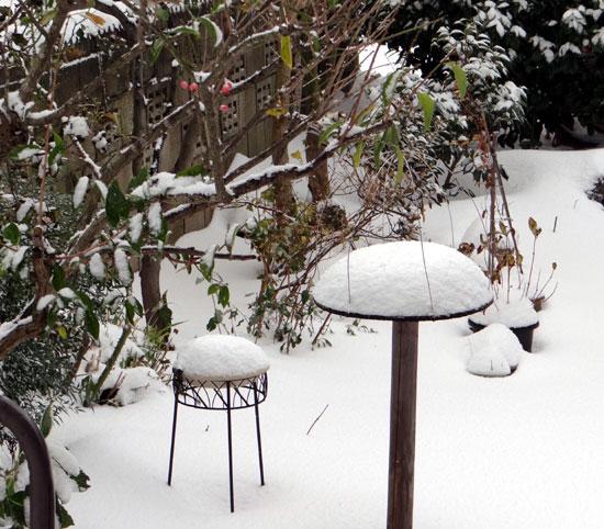 11月の雪。 リンゴ、 スズメ、 シジュウカラ ♪_a0136293_1837449.jpg
