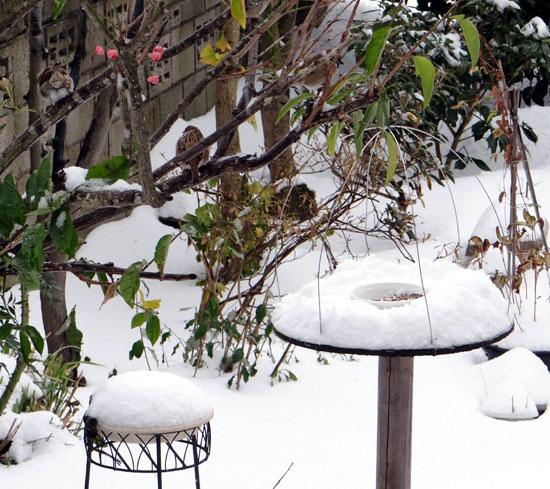 11月の雪。 リンゴ、 スズメ、 シジュウカラ ♪_a0136293_18401836.jpg