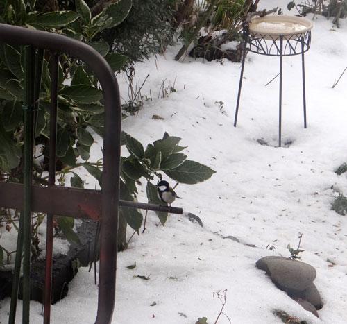 11月の雪。 リンゴ、 スズメ、 シジュウカラ ♪_a0136293_18475797.jpg