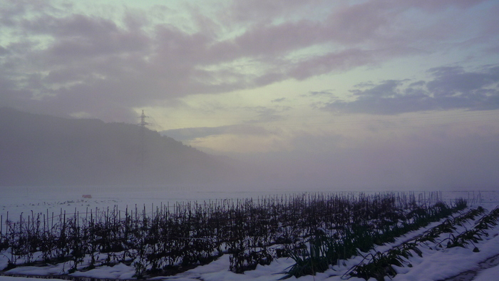 霧に匂いを感じる_a0214206_21383038.jpg