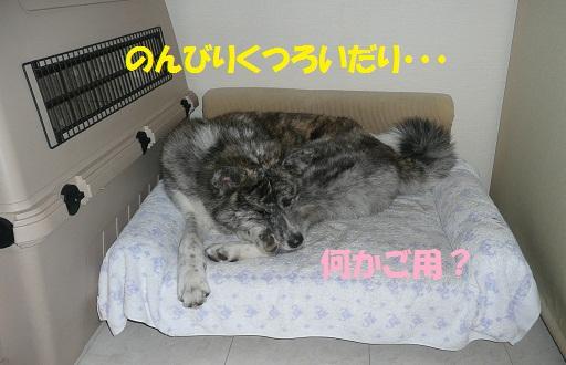 f0121712_16154178.jpg