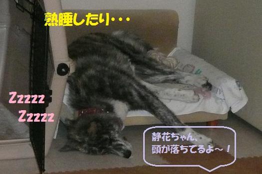 f0121712_1615492.jpg