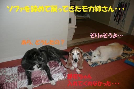 f0121712_16414543.jpg