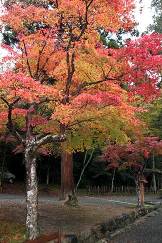 大原野神社 13紅葉だより11_e0048413_17481675.jpg
