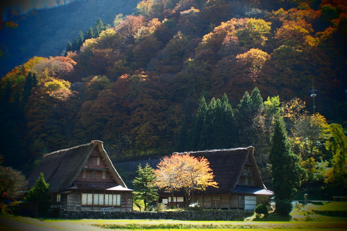五箇山の紅葉風景 ~ハレは手刀で切る~_a0203733_14151658.jpg