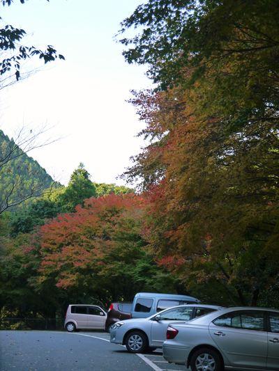 紅葉狩りシーズン到来!! 菊池渓谷の紅葉が見ごろです!_a0254656_1630650.jpg