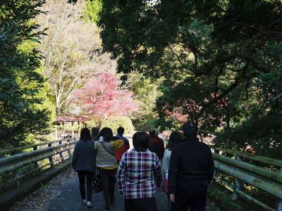 紅葉狩りシーズン到来!! 菊池渓谷の紅葉が見ごろです!_a0254656_16331919.jpg
