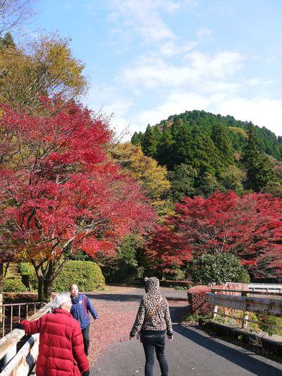 紅葉狩りシーズン到来!! 菊池渓谷の紅葉が見ごろです!_a0254656_16383025.jpg