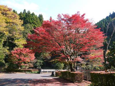 紅葉狩りシーズン到来!! 菊池渓谷の紅葉が見ごろです!_a0254656_1657644.jpg