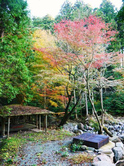紅葉狩りシーズン到来!! 菊池渓谷の紅葉が見ごろです!_a0254656_17152729.jpg