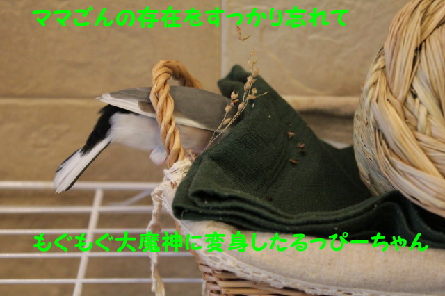 b0158061_2157138.jpg
