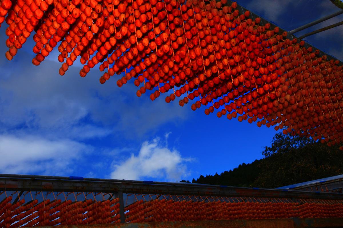 お山の鳥たち_e0254493_8522074.jpg