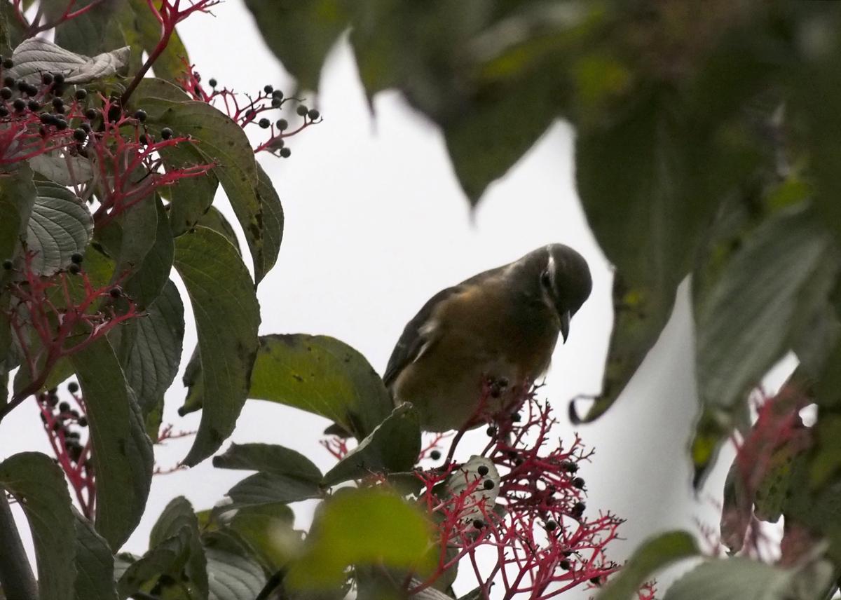 お山の鳥たち_e0254493_8532371.jpg