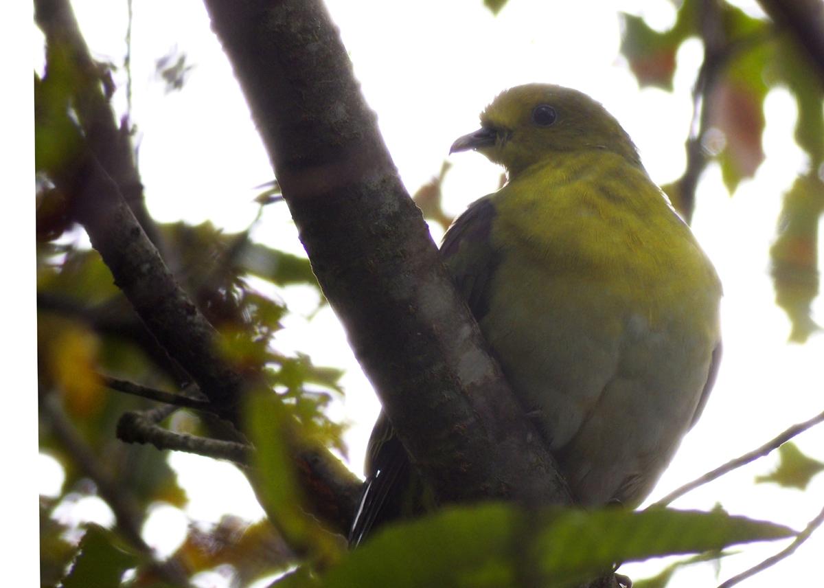 お山の鳥たち_e0254493_8534942.jpg