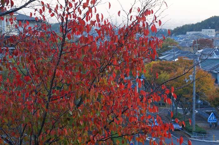 秋の風情_e0016894_18361097.jpg