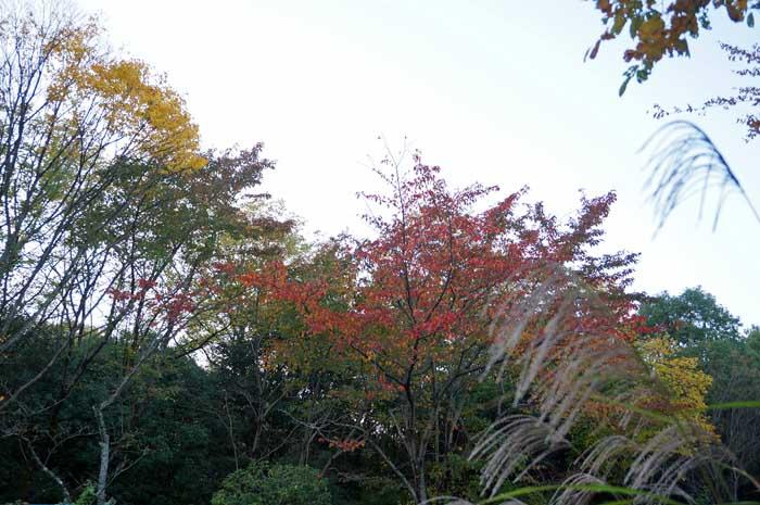 秋の風情_e0016894_18571967.jpg