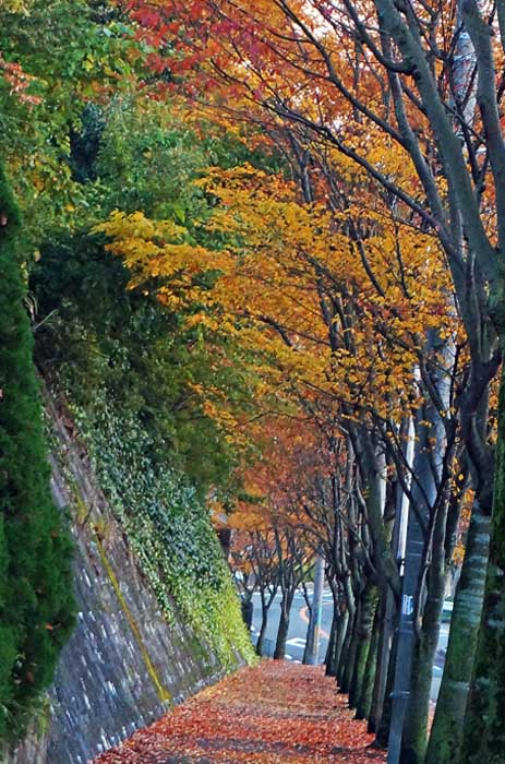 秋の風情_e0016894_18572128.jpg