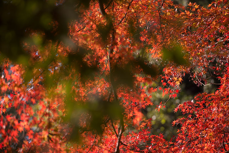 記憶の残像-584  埼玉県毛呂山町-2_f0215695_1345318.jpg