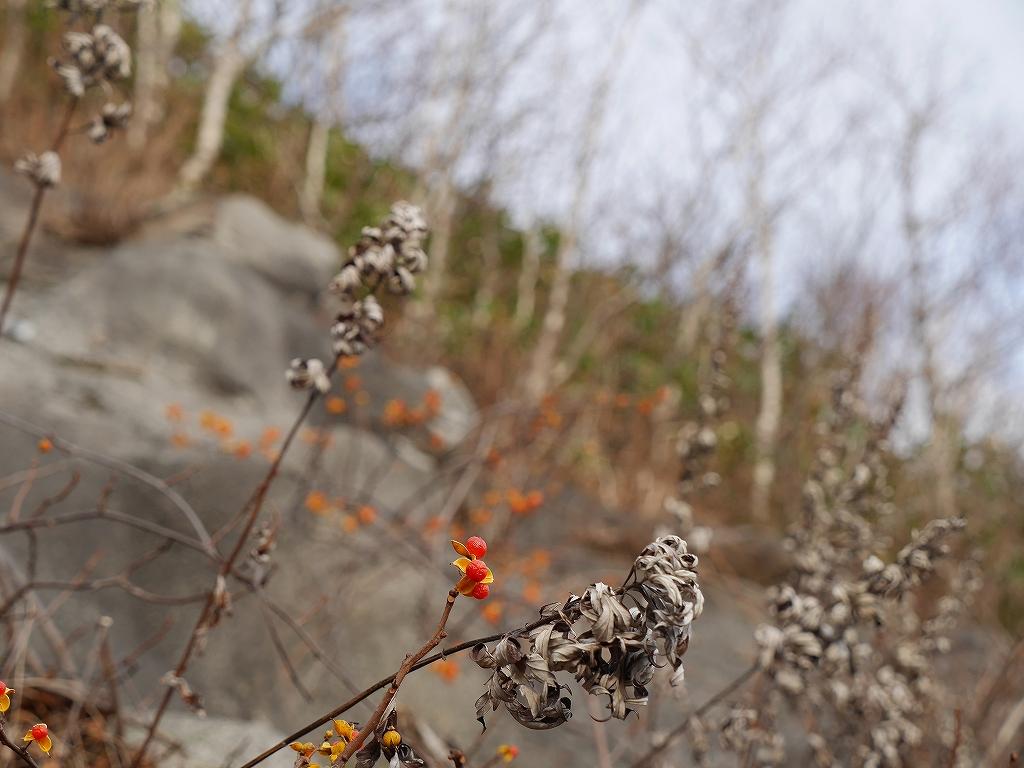 11月14日、恵庭岳と紋別岳-その2-_f0138096_14132872.jpg