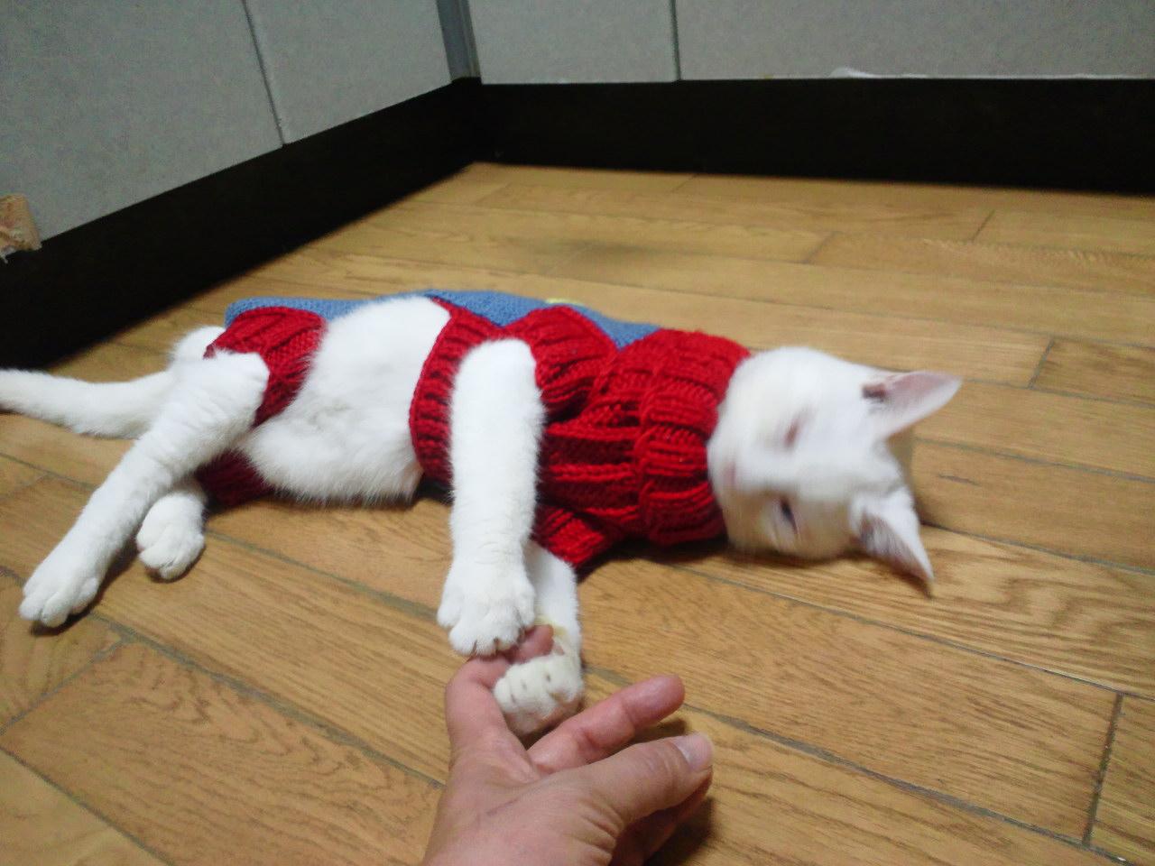 セーターの季節になりました_f0242002_1153432.jpg