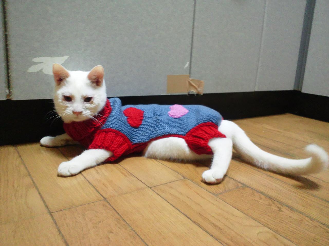 セーターの季節になりました_f0242002_1153538.jpg