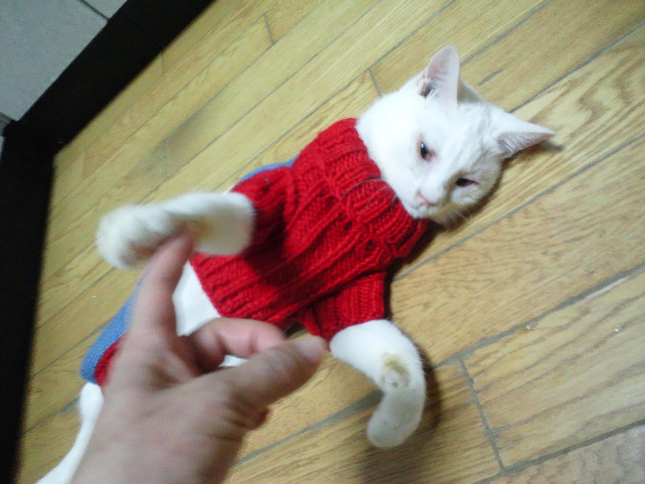 セーターの季節になりました_f0242002_11541464.jpg