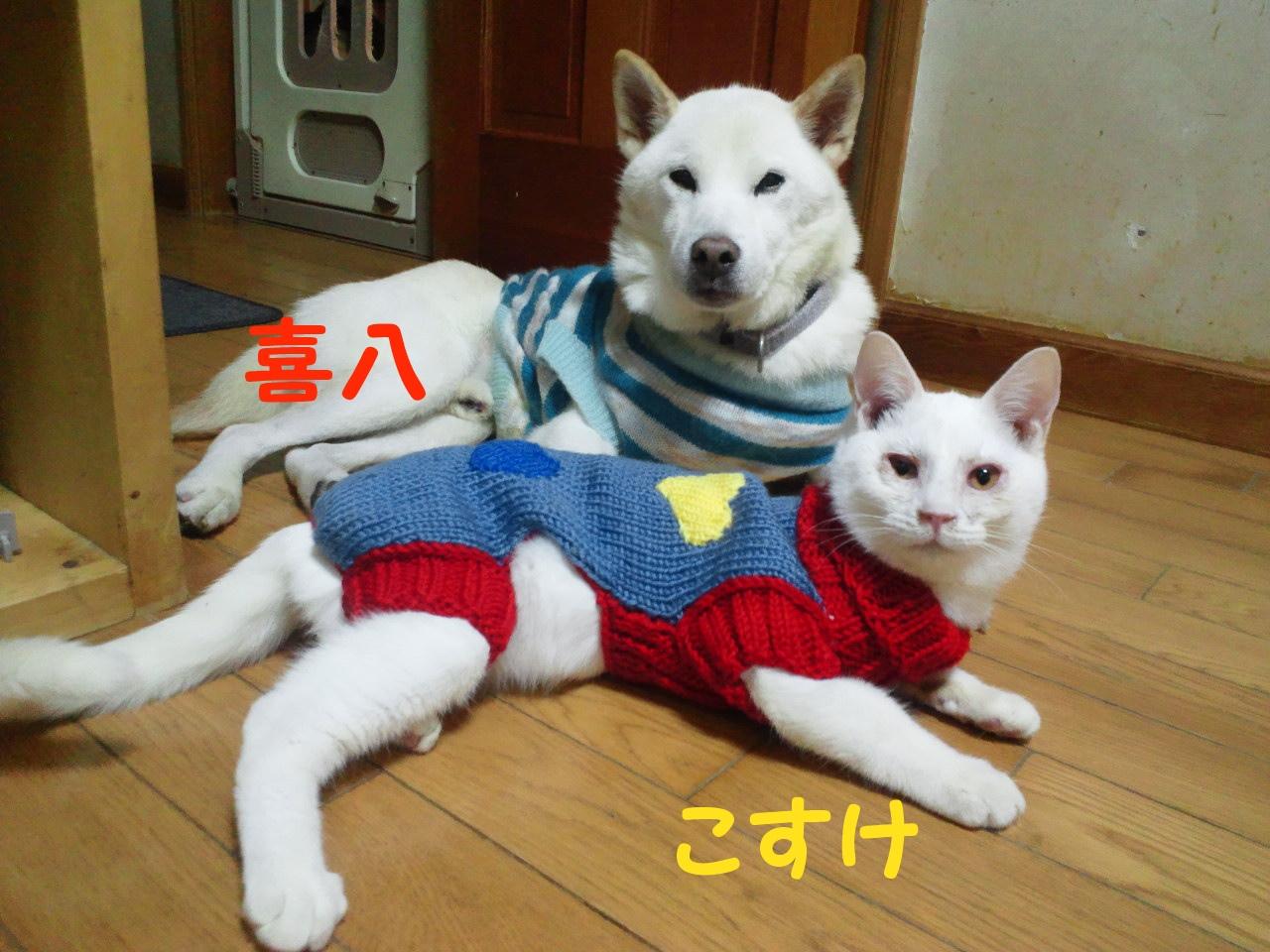 セーターの季節になりました_f0242002_1156116.jpg