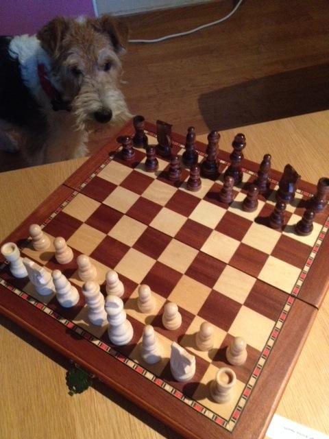 Chess★チェスの時間_a0229904_033864.jpg