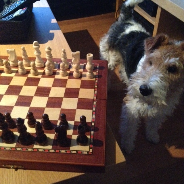 Chess★チェスの時間_a0229904_035618.jpg