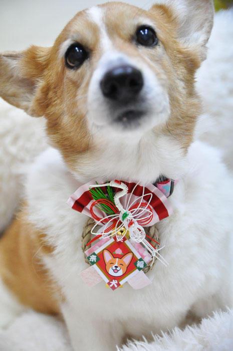 2014年 笑犬来福お正月飾り_d0102523_1833753.jpg
