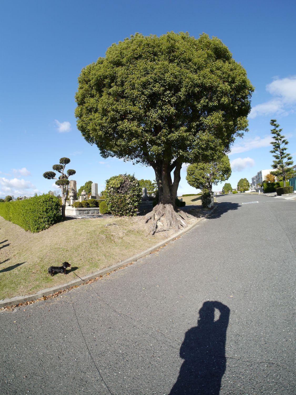 近所を散歩_b0069128_10251740.jpg
