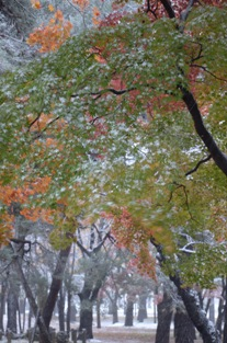 初雪の合浦公園_c0299631_23503923.jpg